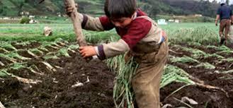 1.1 Millones de niños mexicanos trabajan sin remuneración