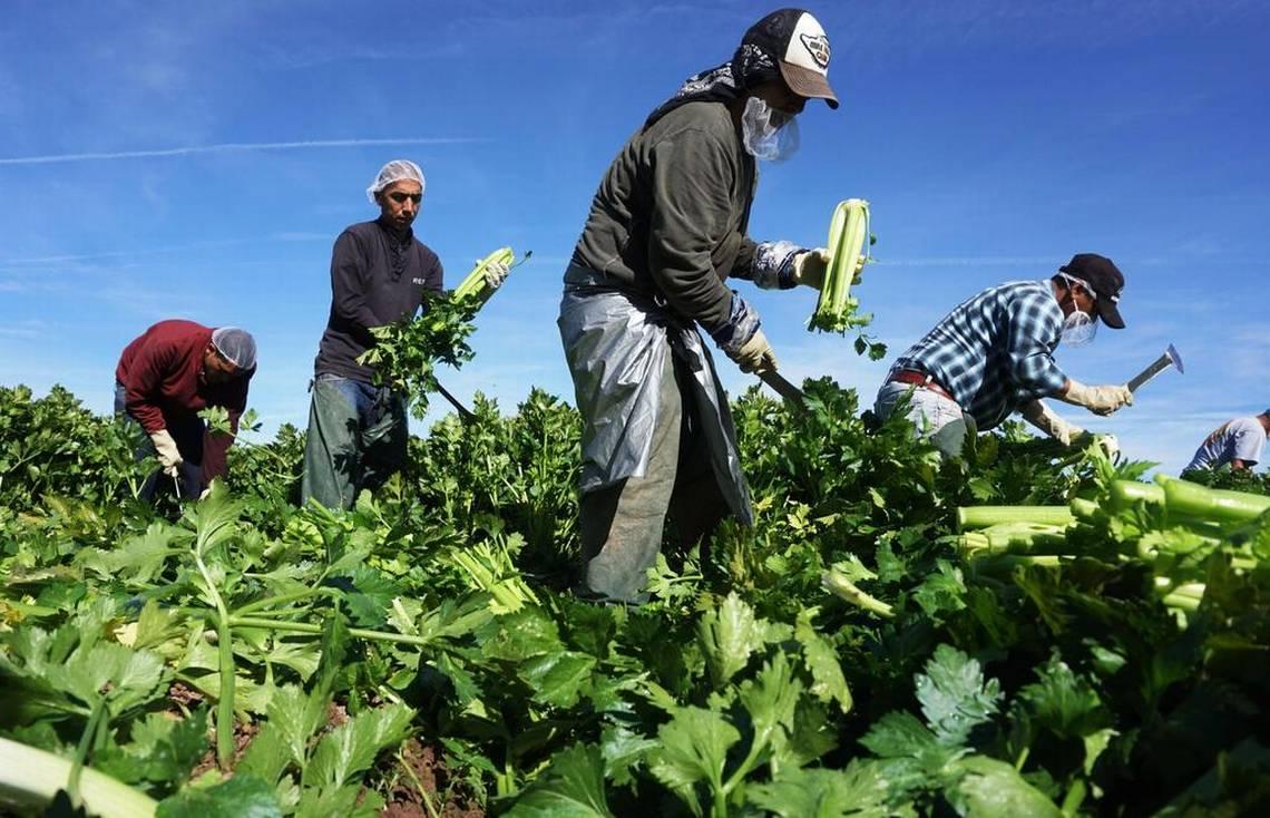 16 millones de mexicanos en el sector laboral de EUA