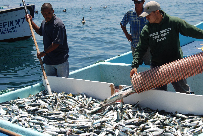 300 mil personas dependen del sector pesquero y acuícola en México