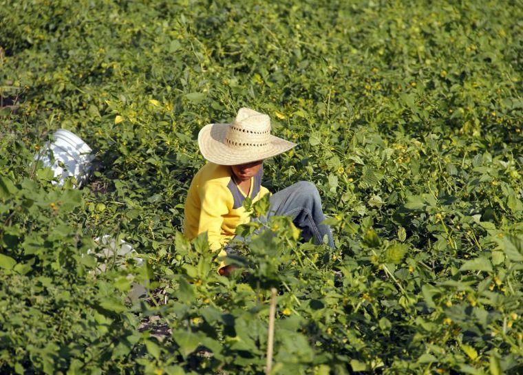 Advierte CEPAL aumento del trabajo infantil por coronavirus