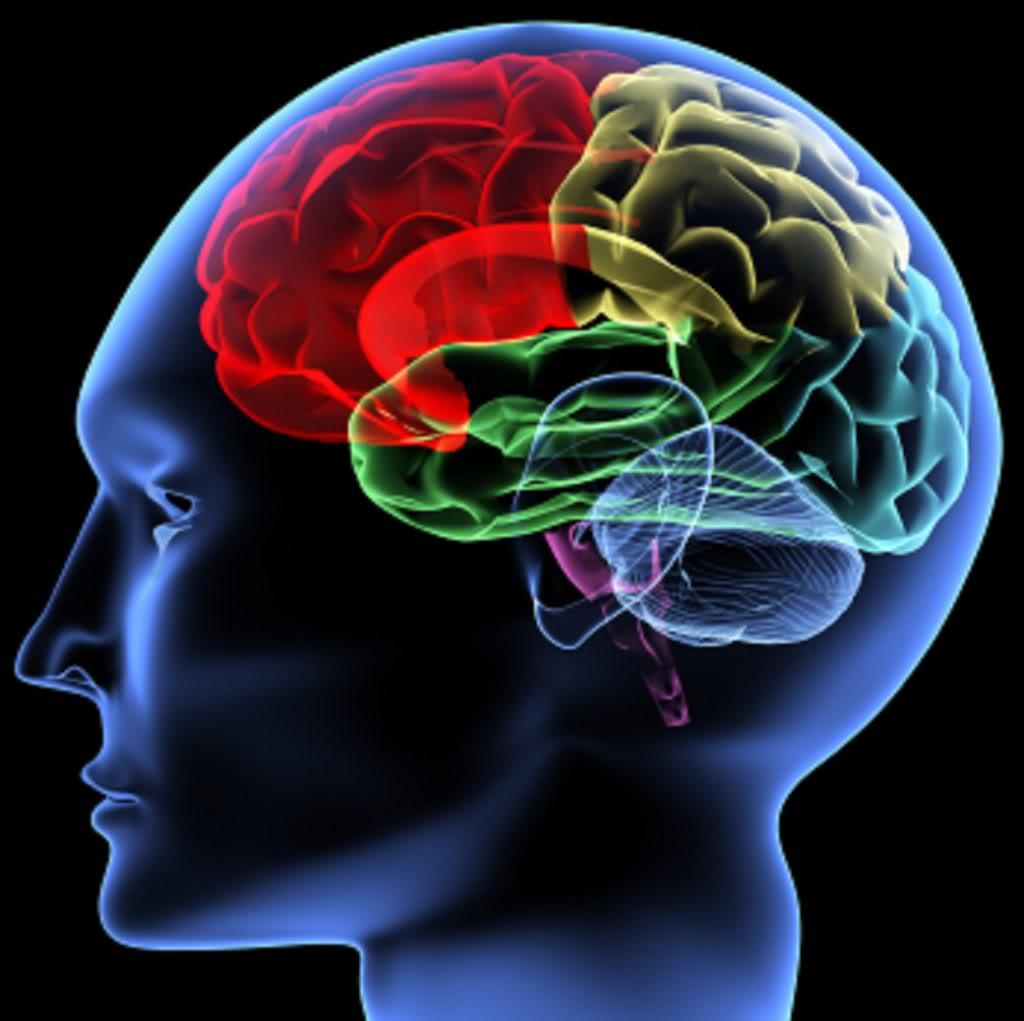 Afecta obesidad funcionamiento del cerebro