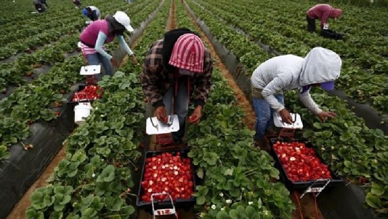 Arman cruzada para proteger a jornaleros agrícolas