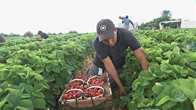 Autoridades en contra de la explotación laboral agrícola