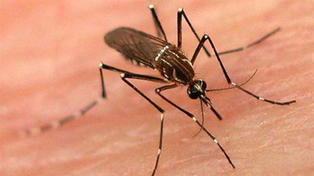 Casos de dengue a la baja en 2016 en Tamaulipas