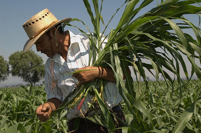 Da México empleo a migrantes de 3 países