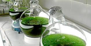 Desarrollan microalgas que benefician a la salud