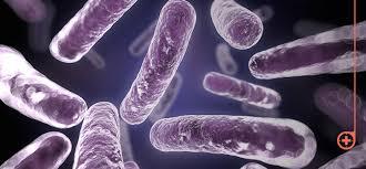 Descubren estructura celular de parásito de diarrea
