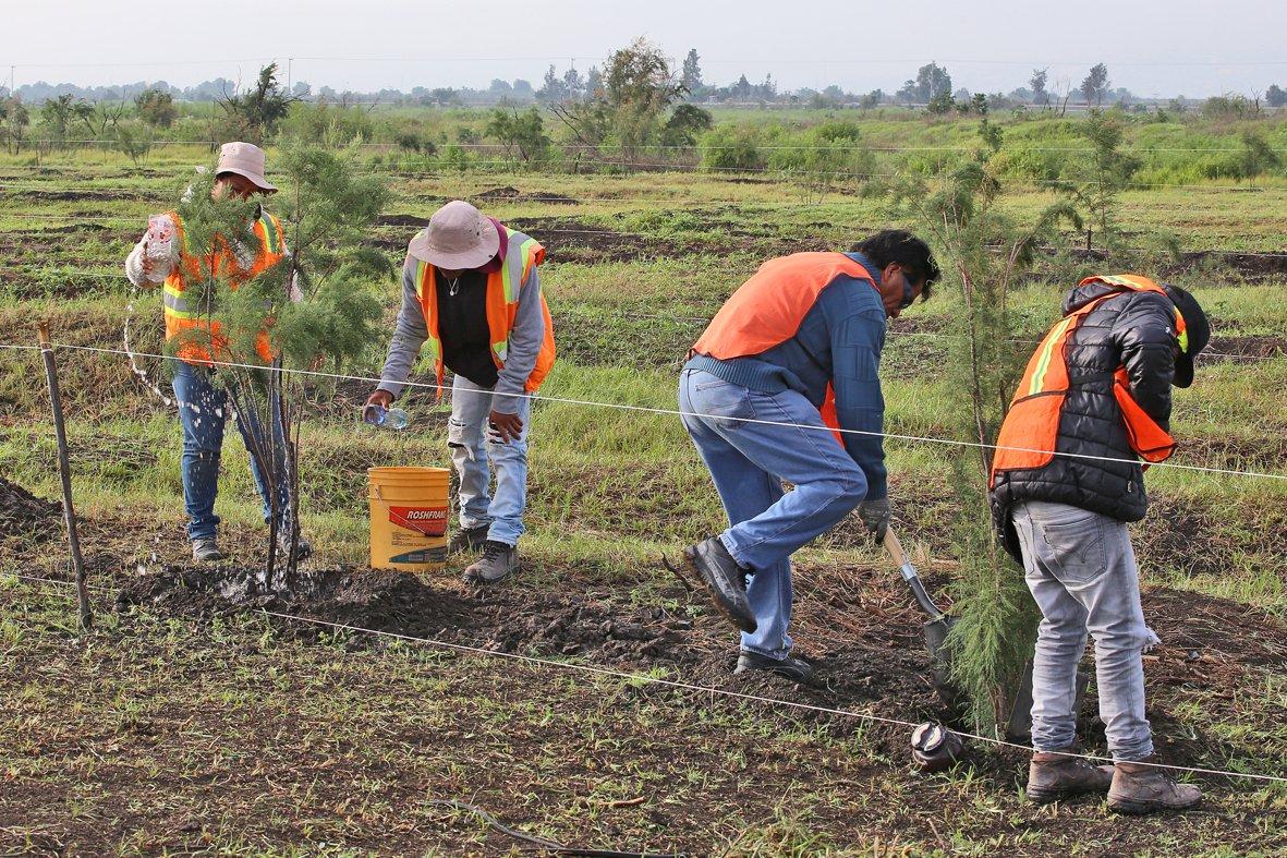 Dos mil empleos temporales para rescatar flora y fauna en NAICM