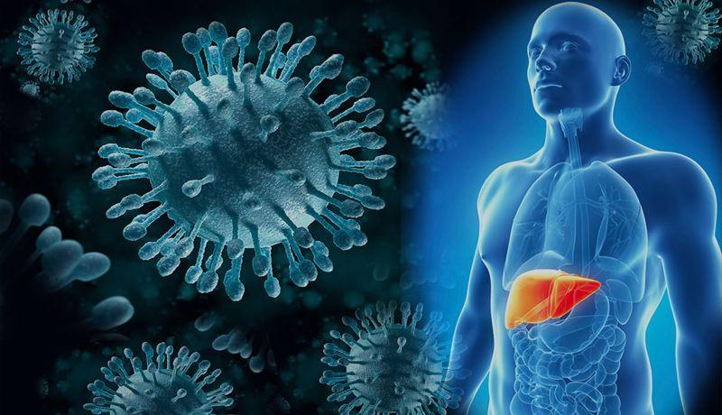 Éxito de terapia contra Hepatitis C depende del genotipo del virus