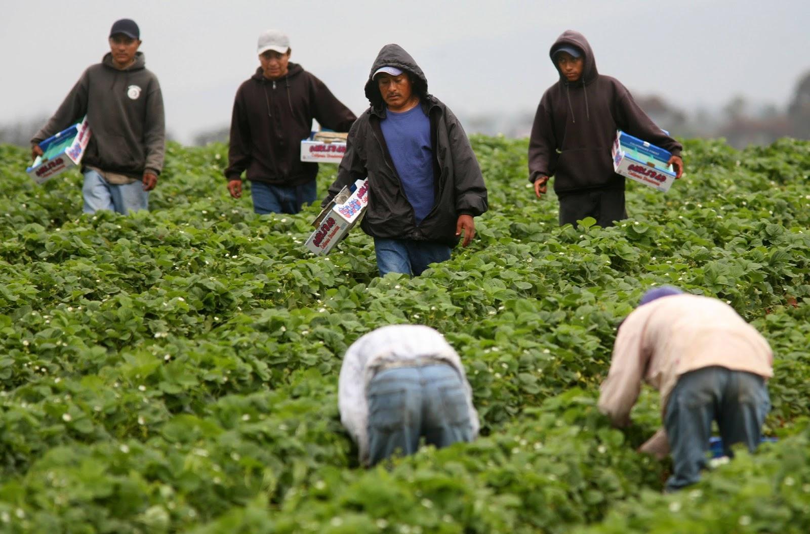 Impulsarán políticas para migración laboral legal