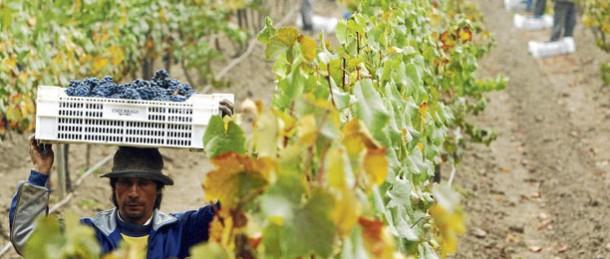 Industria vinícola da empleo a connacionales