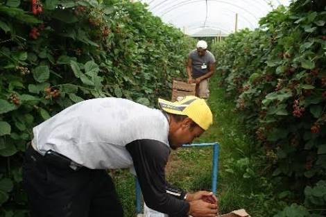 Inicia empleo agrícola con Canadá