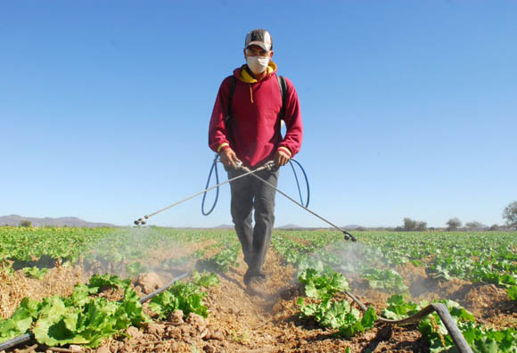Jornaleros agrícolas ponen a prueba obligaciones laborales de EU en el T-MEC