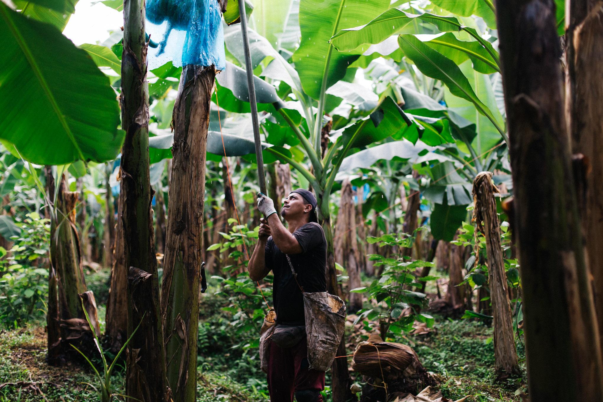Jornaleros agrícolas se beneficiarán con certificado de responsabilidad social
