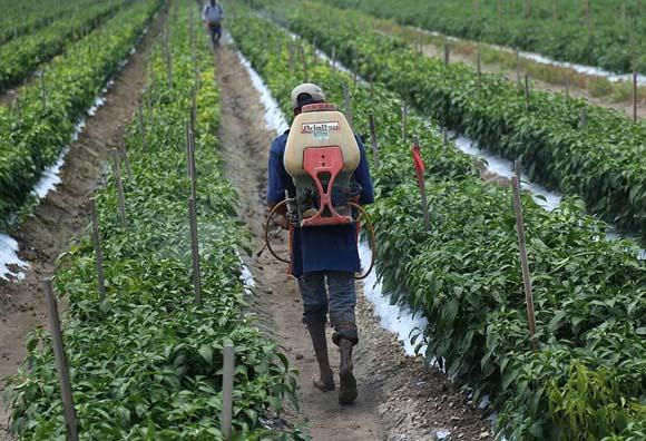 Jornaleros agrícolas señalan que el salario mínimo de $160.19 es insuficiente