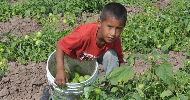Laboran en agro 30% de menores de edad