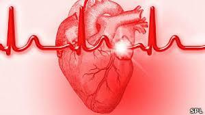 Localizan proteína tratamiento cardiovascular