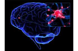 Mantener el cerebro saludable retrasa males neurodegenerativos