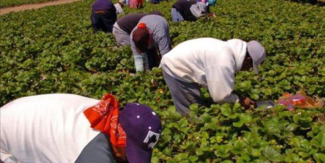 Más de 100,000 agrícolas en EU, en incertidumbre