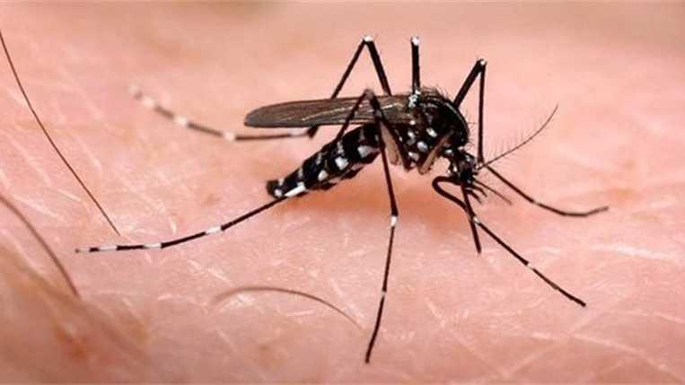 México tiene mil 490 casos de zika; 689 son embarazadas
