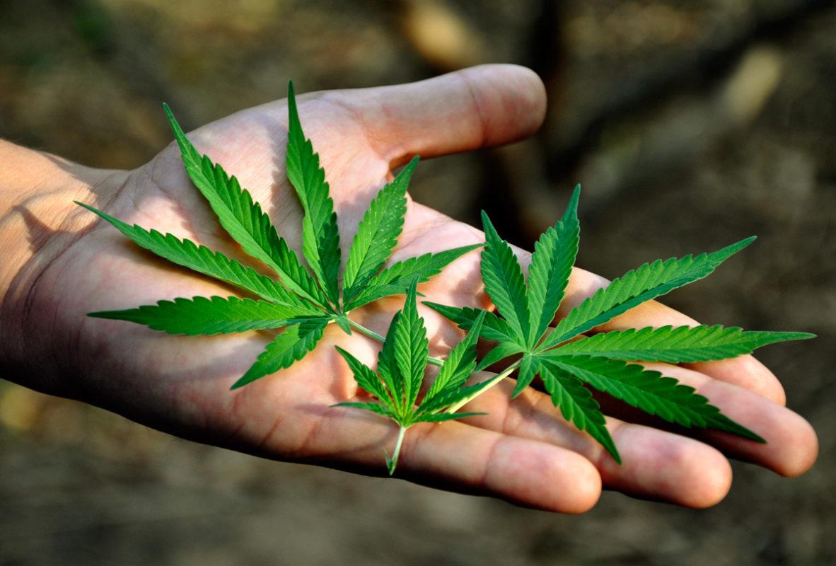 Morena propone debatir en el Senado el uso lúdico de la mariguana.