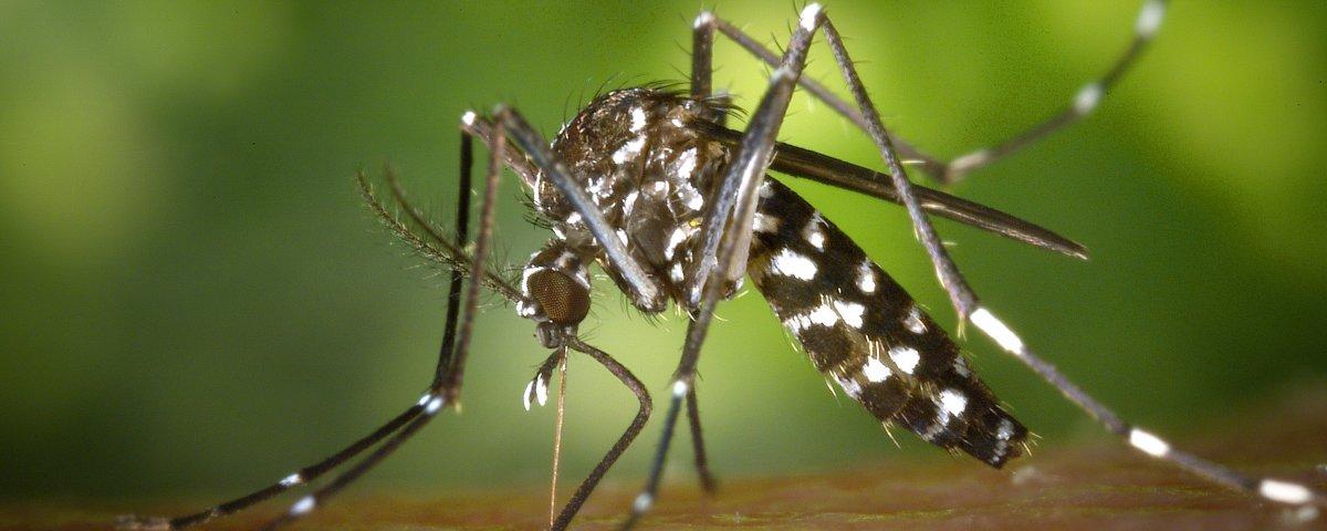 Otro efecto del Zika: Daños visuales