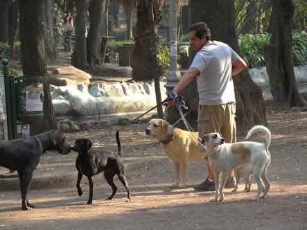 Pasear perros, opción de empleo en la CDMX