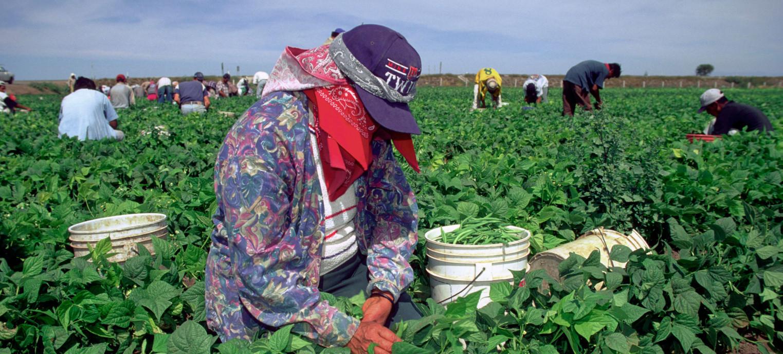 Piden garantizar nuevo salario mínimo fronterizo a jornaleros agrícolas