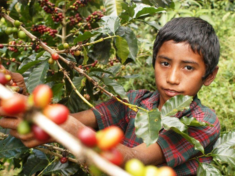 Piden valorar si todo trabajo infantil debe eliminar