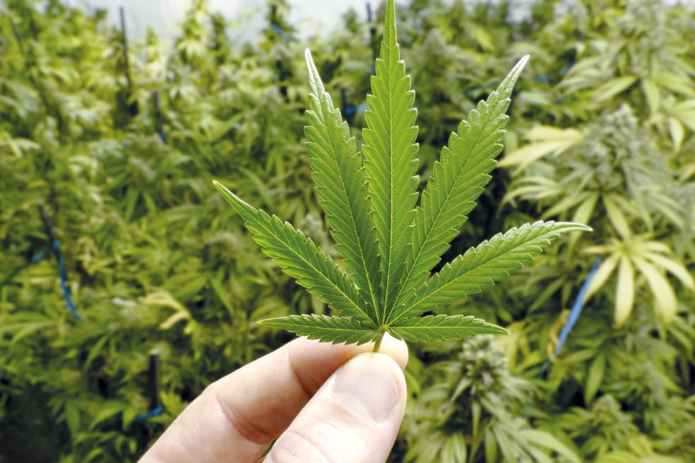 Por primera vez en el CES: Tecnología médica para la Marihuana