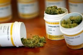 Presentarán iniciativa de cannabis medicinal