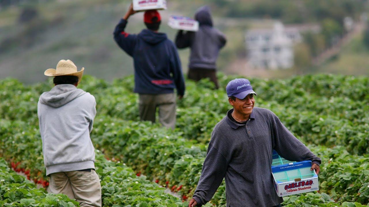 Promueve IMSS empleo a campesinos... y atención médica