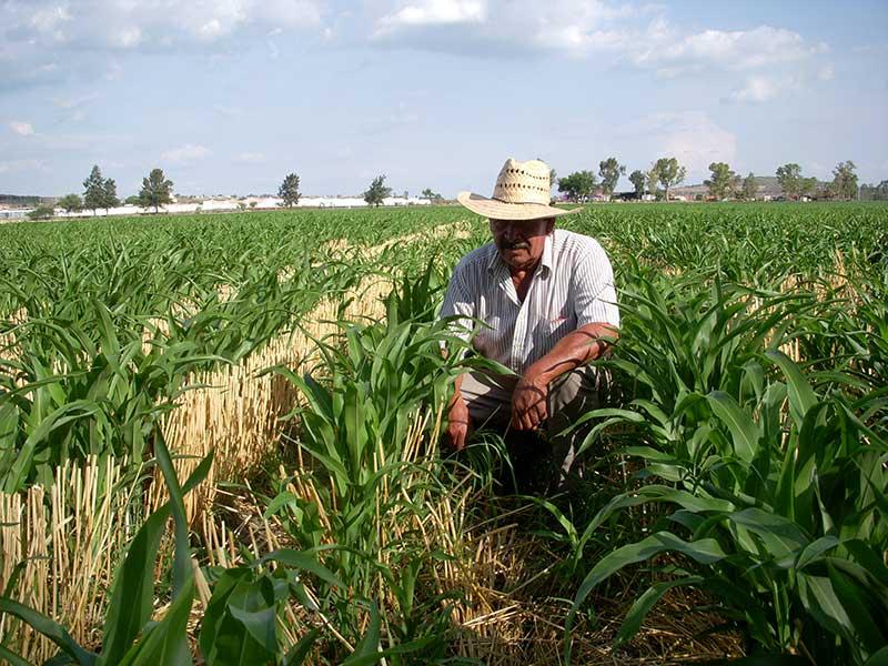 Proponen garantizar la seguridad social para los trabajadores del campo