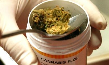 Quieren en el DF mariguana para uso medicinal