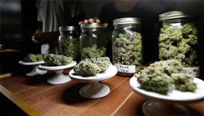 Realizan simposio latinoamericano de cannabis medicinal en Jalisco