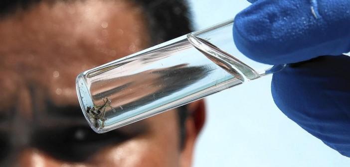 Reportan primeras dos muertes en California por virus del Nilo