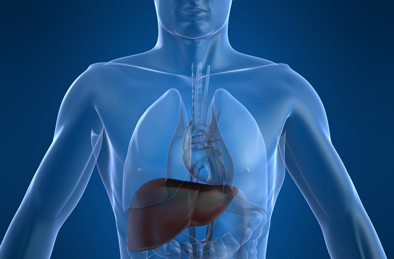 """Se """"devora"""" hepatitis a 1.4 millones de personas en el mundo"""