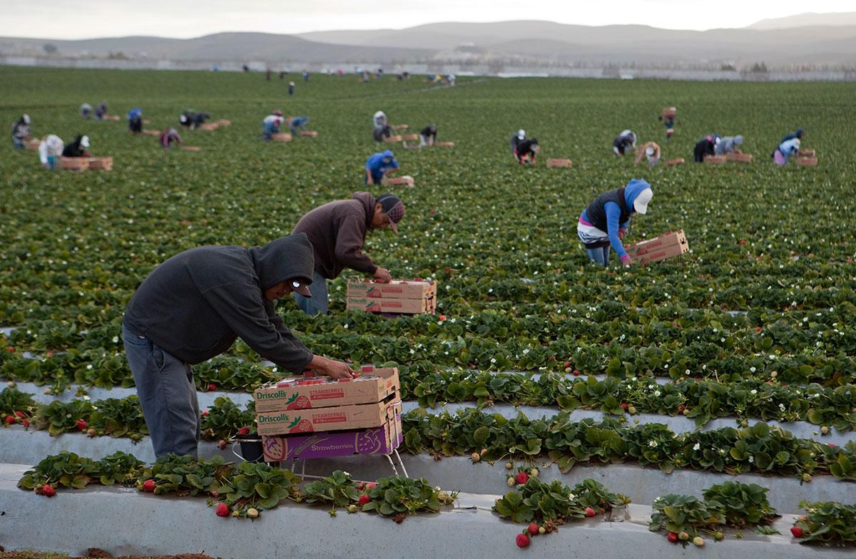 Siguen jornaleros sin salario mínimo ni seguro social