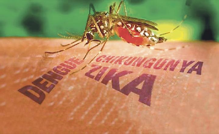 SSA insta a mantener combate a mosco transmisor de dengue