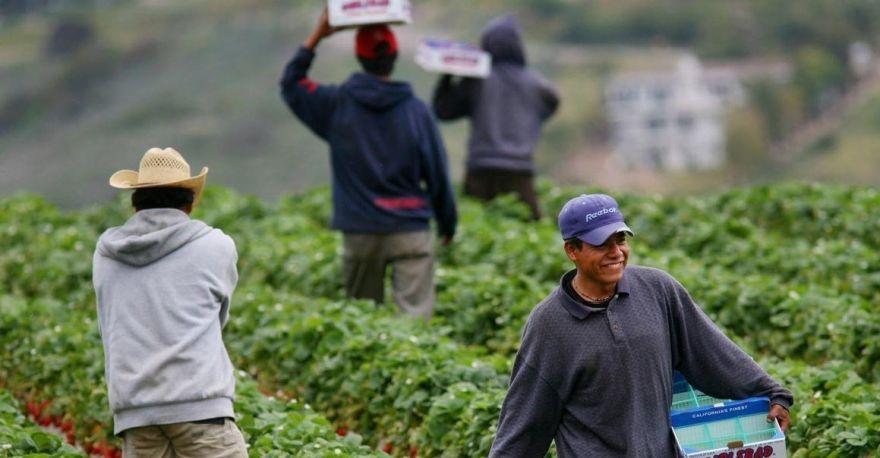 STPS ofrece a jornaleros agrícolas defraudados información para trabajar en Canadá