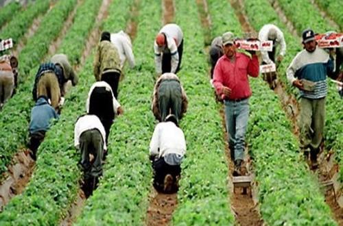 Trabajarán 4 mil jornaleros en granjas de EU