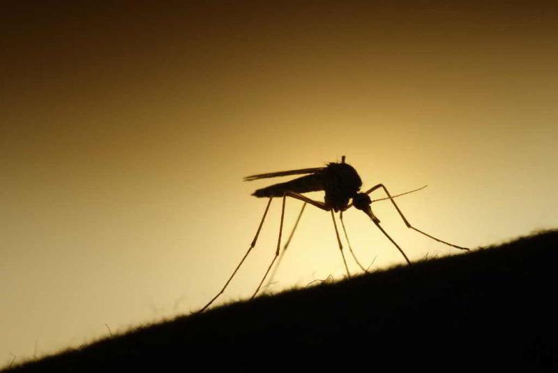 Van 199 casos de zika en el país; 70 son embarazadas