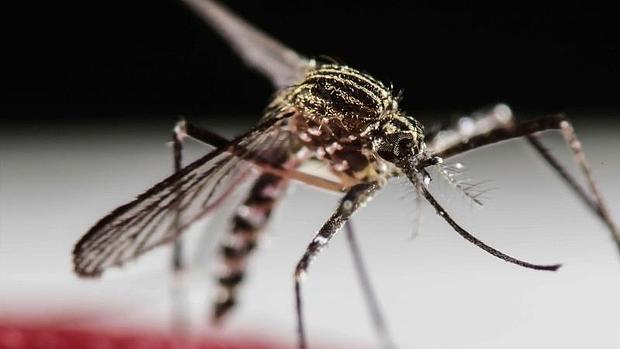 Van 252 casos de Zika, 65 son de embarazadas