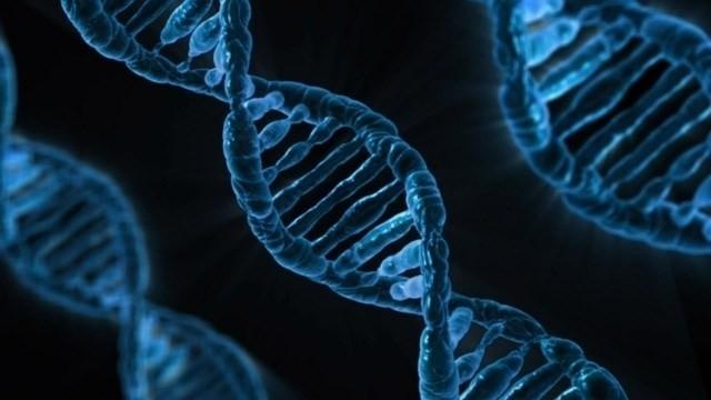 """Varios cánceres son errores en el """"corrector"""" del ADN"""