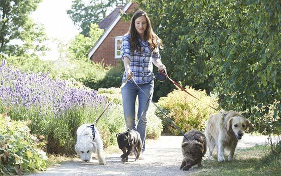 Adiós profesores, hola encantadores de perros