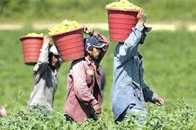Aplican correcciones a campos agrícolas