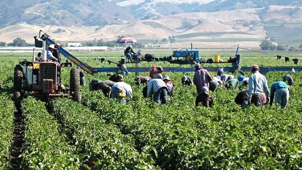 Empresas del agro presentarán plan para rescatar a jornaleros agrícolas