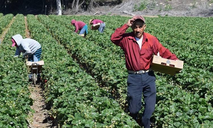 Exige Senado atender violaciones a derechos laborales de mexicanos en EU