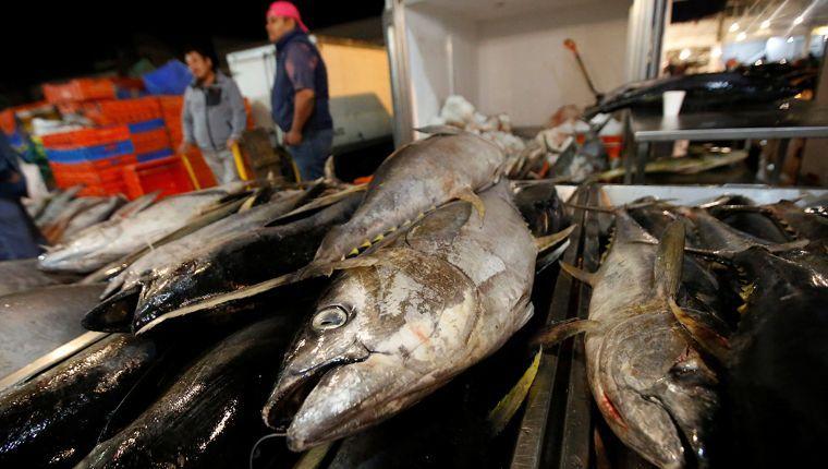 Impacto del Covid 19 en el sector pesquero y acuícola