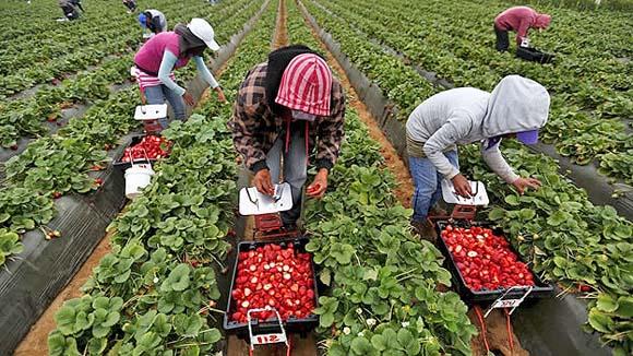 Jornaleros ven insuficiente alza al salario mínimo del sector